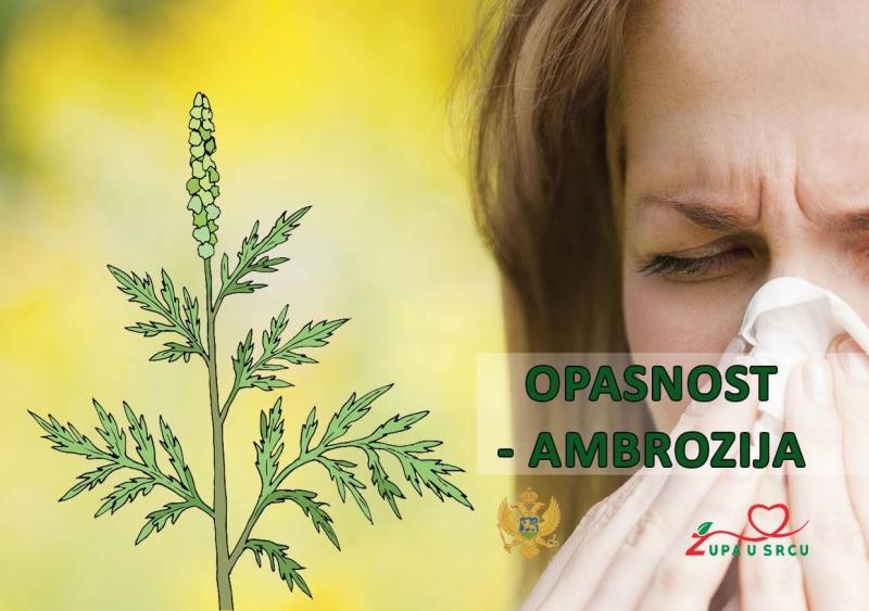 Projekat ''Opasnosti ambrozije''