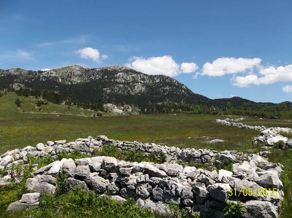 Zrno Brajičić i vile iz Borovnika