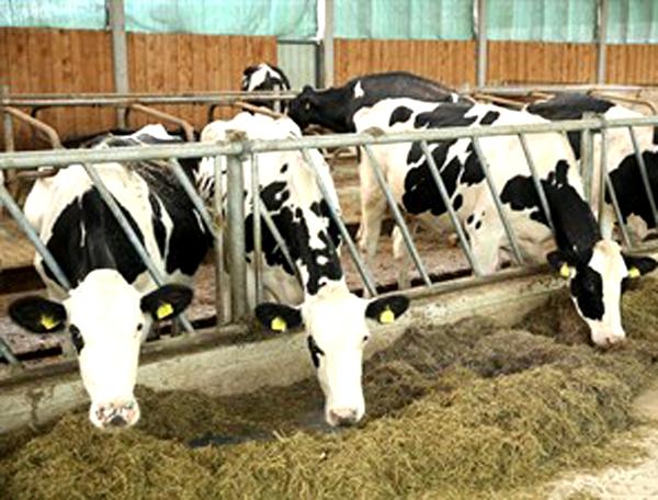 Prijave za premije u stočarstvu od 15. februara
