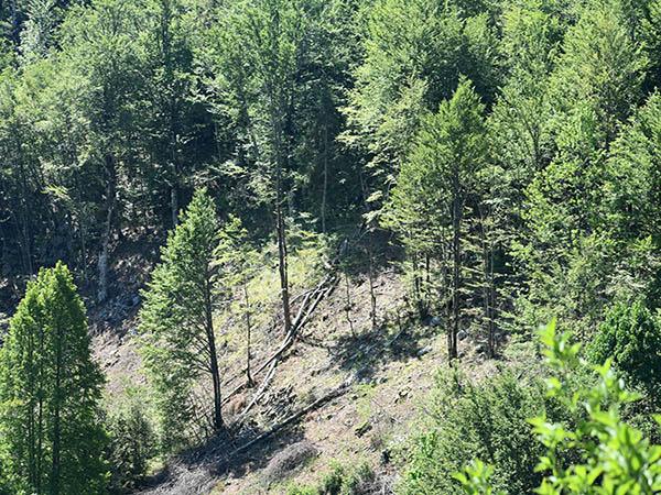 Trening u cilju zaštite šuma